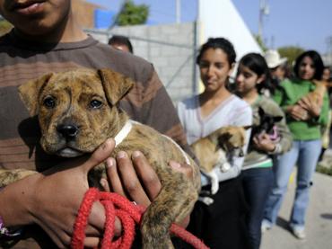 Impulsa UAEM tenencia responsable de mascotas