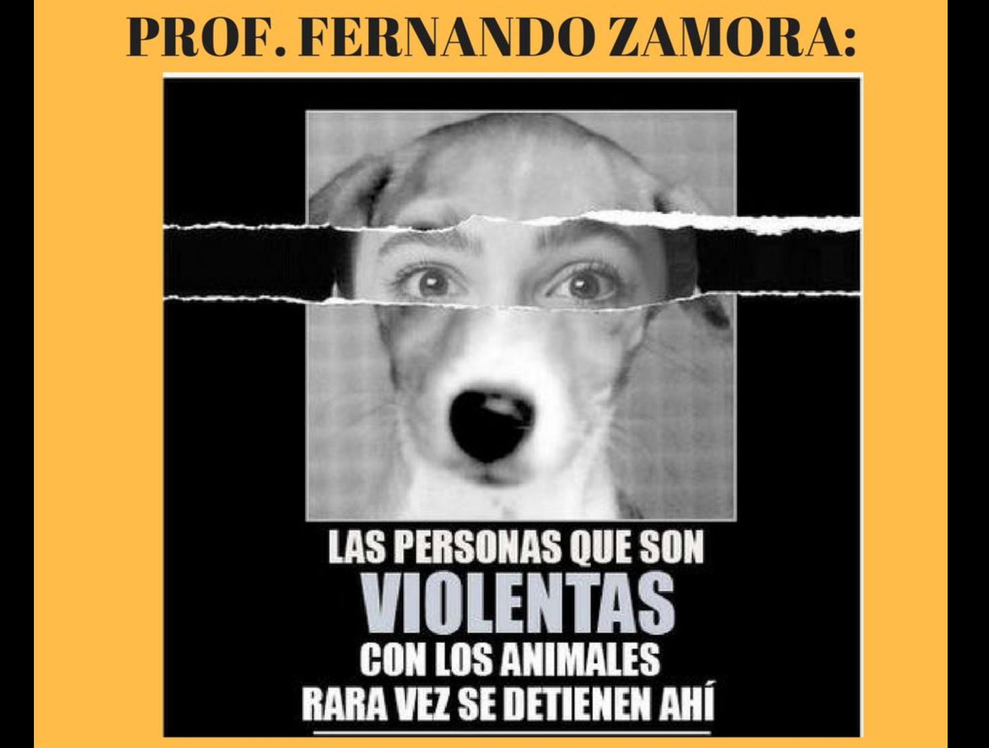 Responde protectora de animales al alcalde de Toluca