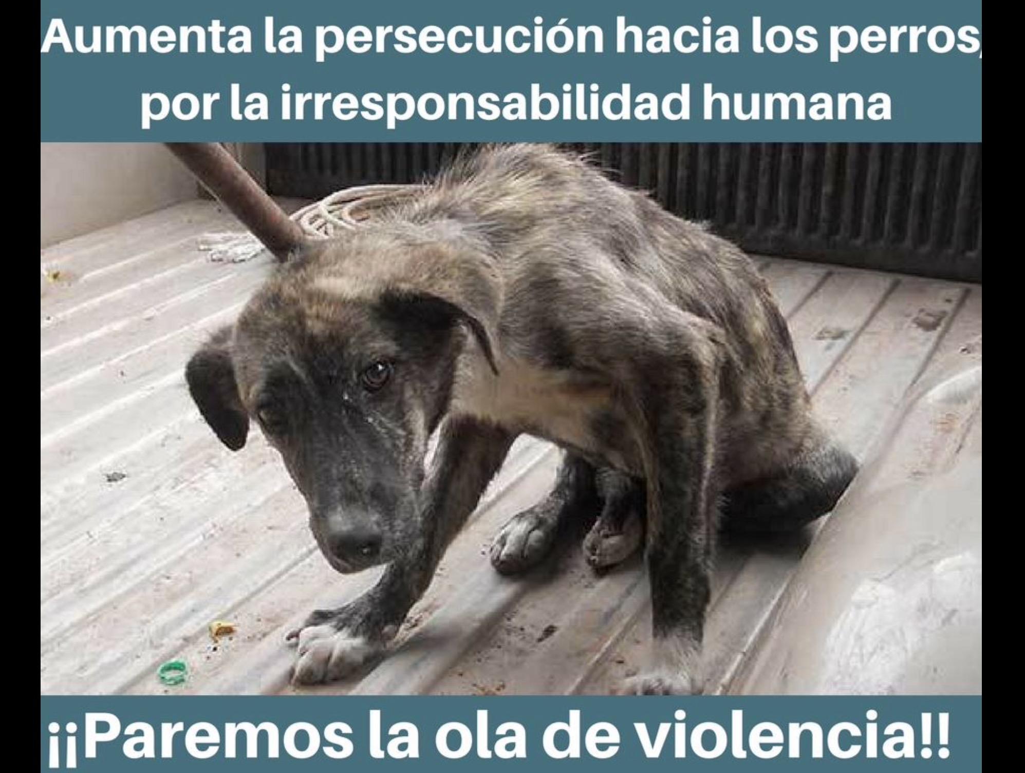 Matanzas de perros en Toluca y Metepec; autoridades lo toleran
