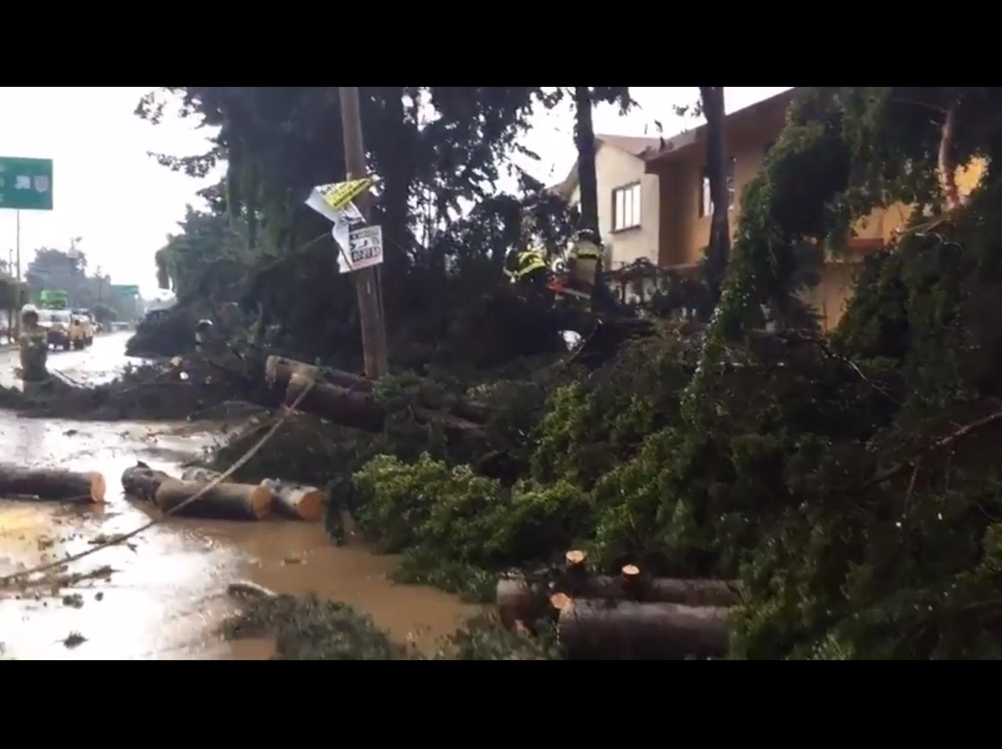 Ráfagas de viento arrancan árboles sobre Paseo Colón