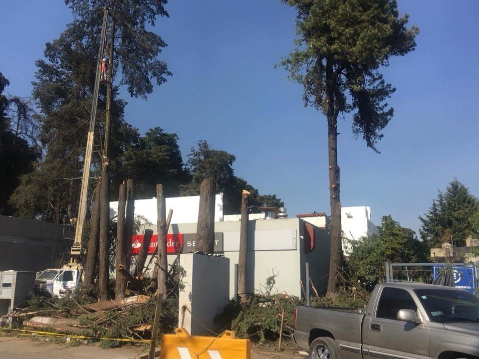 Defiende ayuntamiento de Toluca tala en Paseo Colón