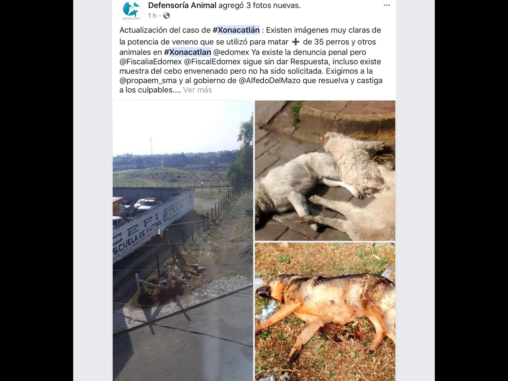 Investiga Codhem exterminio de perros en Xonacatlán