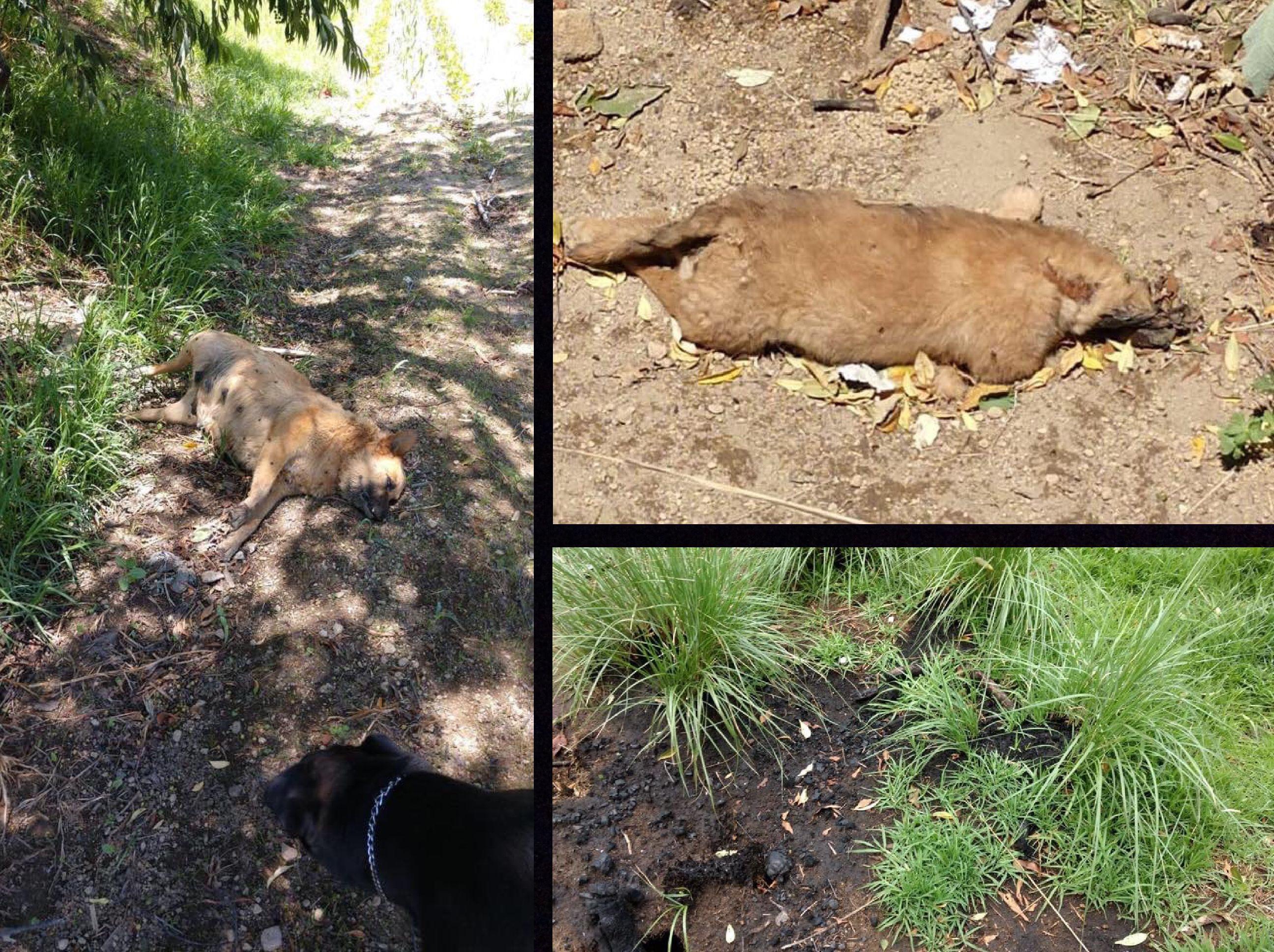 Más crueldad animal en Edoméx, ahora en Metepec