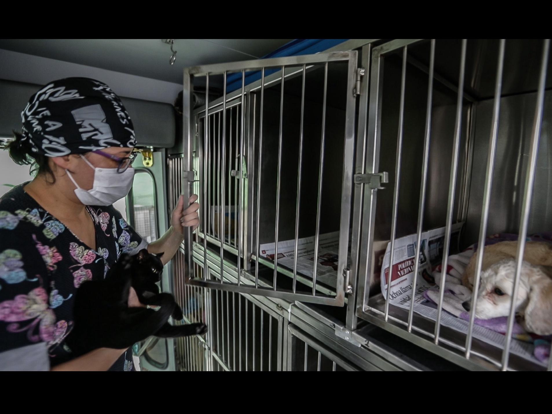 UAEM rinde cuentas sobre esterilización de mascotas