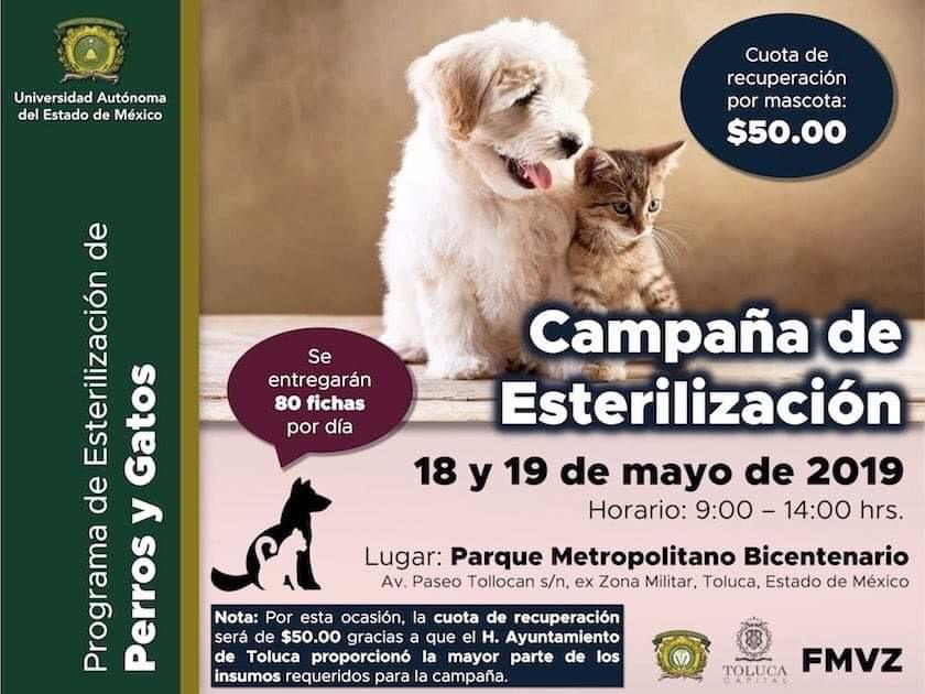 Arman Toluca y UAEMéx campaña de esterilización canina y felina