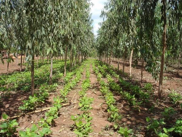 Contra el daño ambiental, la agroforestería: UAEM