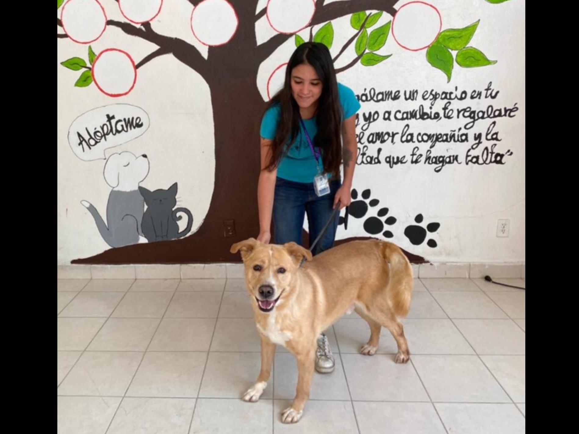"""Promueve Toluca adopción de """"lomitos"""" y """"michis"""" vía telefónica"""