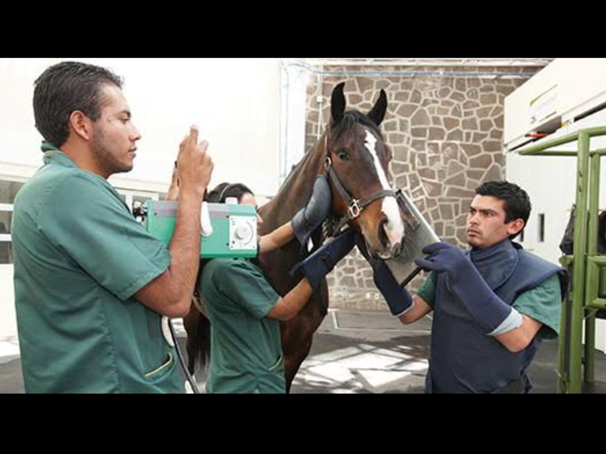 Con programa académico, UAEM celebra a veterinarios