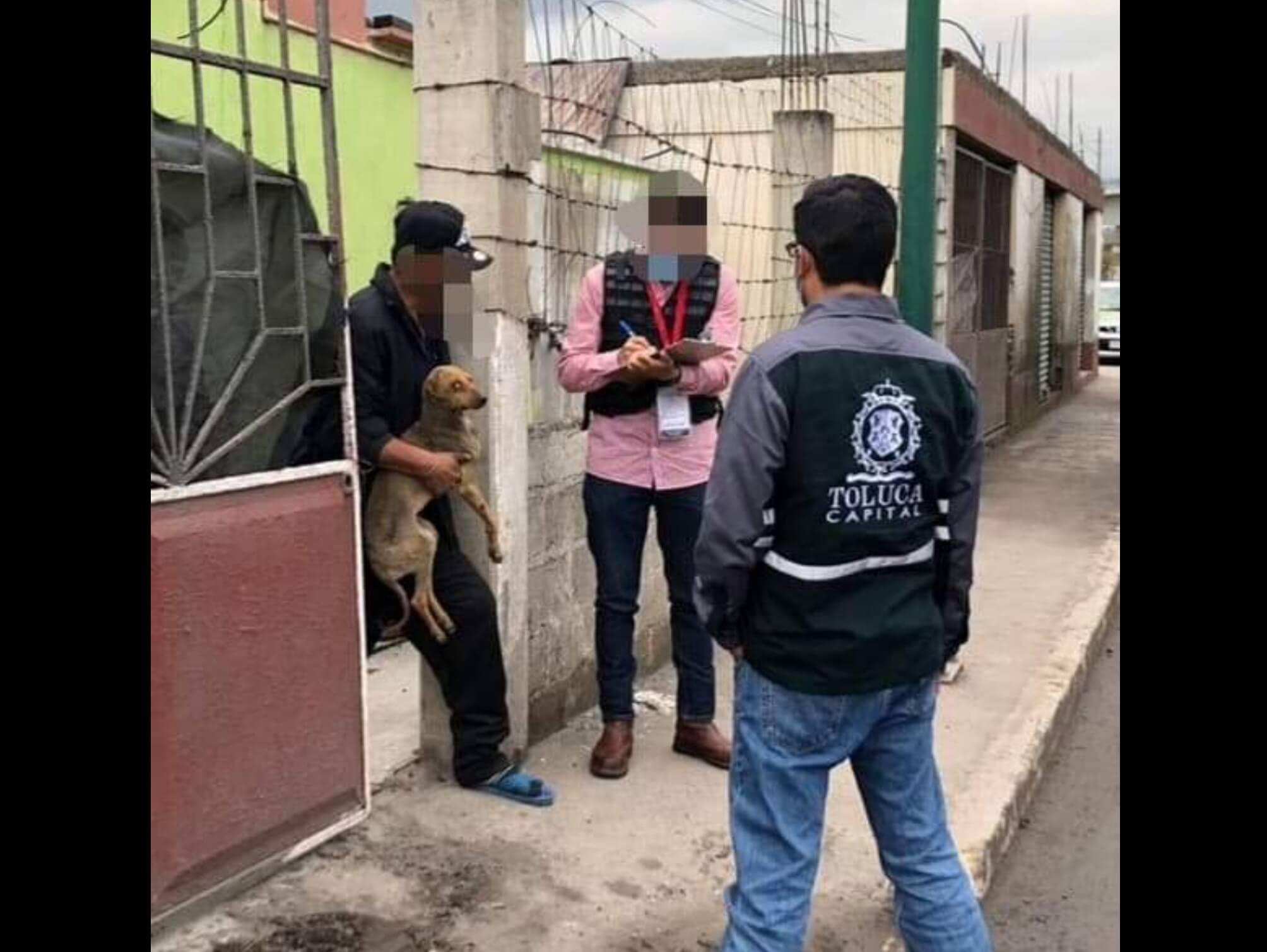 Rescatan a perrita en Toluca; sufría maltrato animal