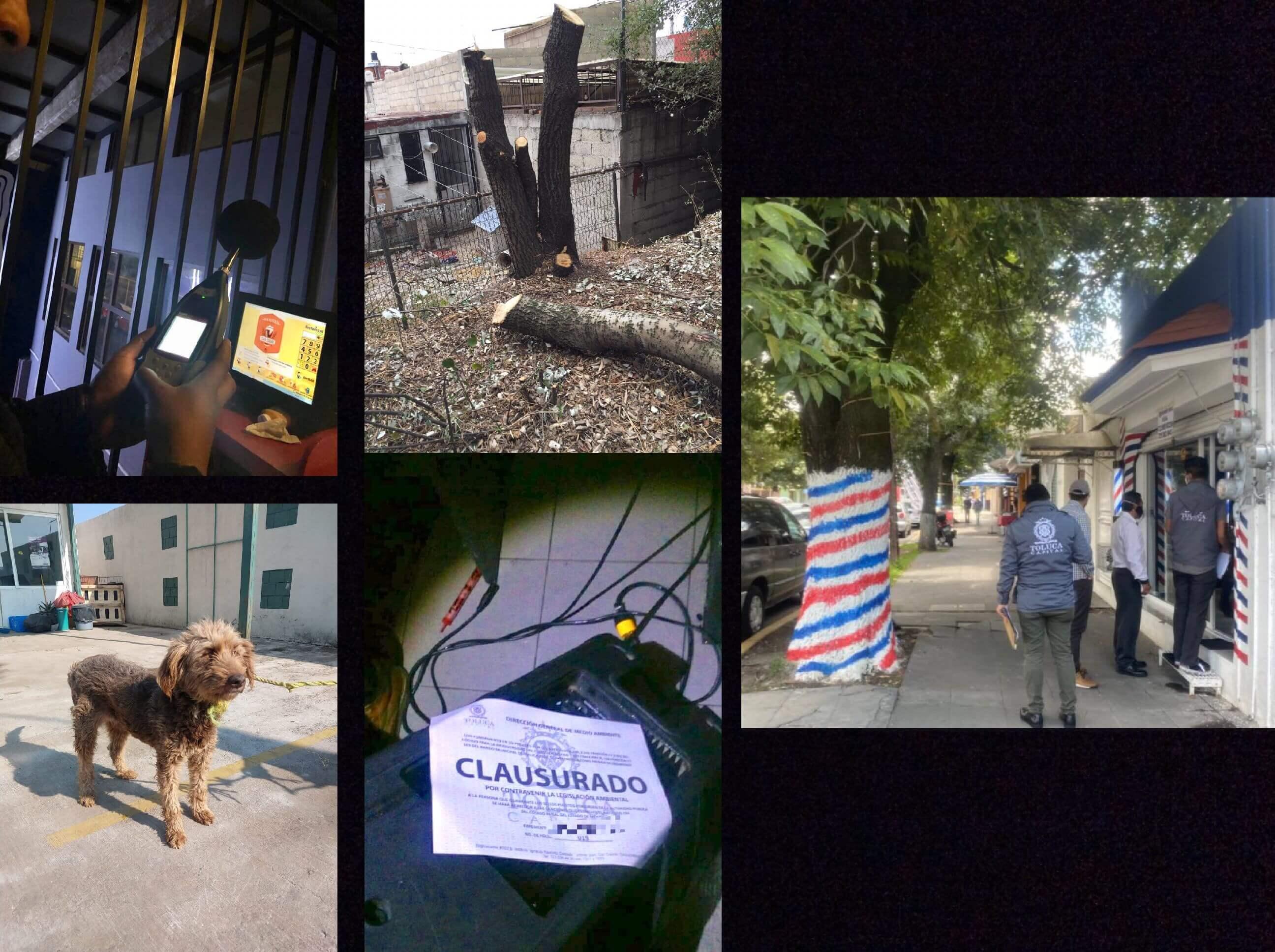 Atiende Toluca 171 denuncias ambientales durante contingencia sanitaria