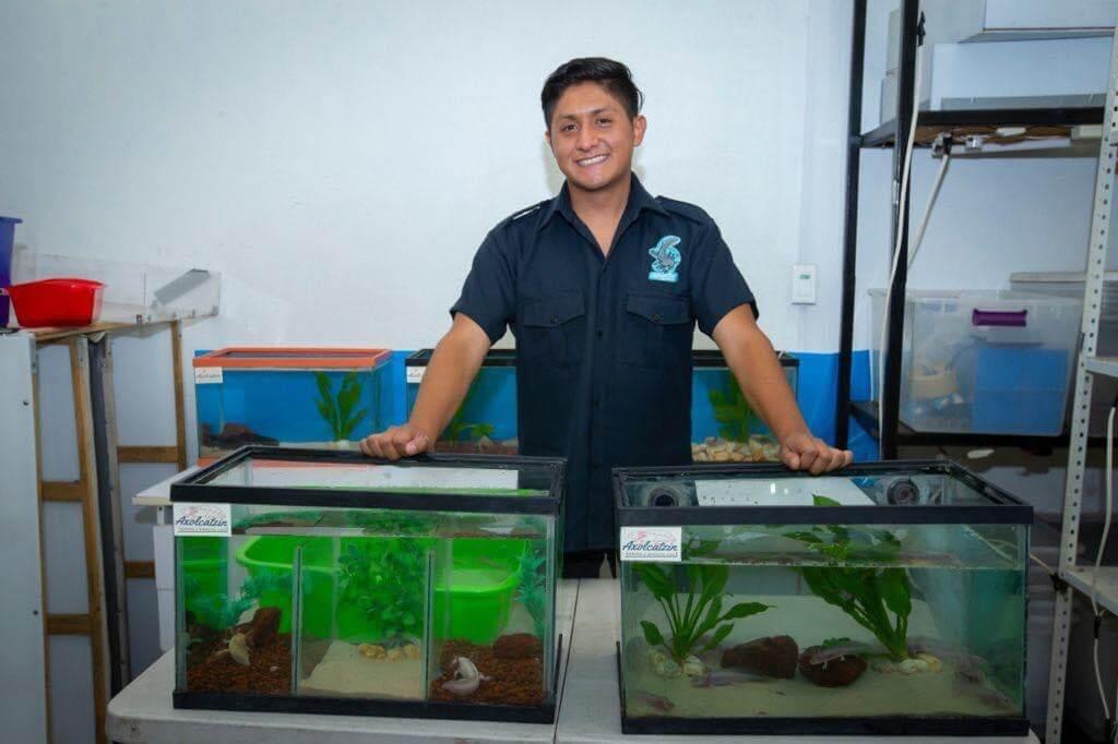 Alumno de UAEM logra protección y supervivencia de 500 ajolotes